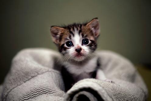 KittenUnderTheKitchen